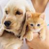 【2020】ペット保険金請求が多い傷病は?~猫は「下痢」がトップ~