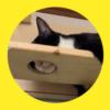 【爆睡中】マッサージの施術ベッド的な寝方が個性強めで可愛いすぎる猫さん