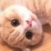 【軟体ころころ猫】めちゃくちゃな体勢のもふもふ猫さんが二度見の可愛さ~