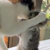 【子猫を迎えたら…】先住猫さんクールっ子から一転~優しいお姉さんに~
