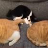 想像超えてきた隙間ハマリ猫!ころりんぱでジャストフィットな保護猫さん