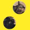 ジーパンに上手いこと潜むサビ猫さん&黒猫さんが話題です