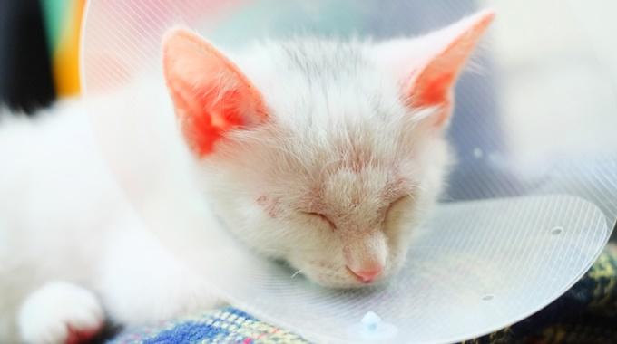 猫の皮膚病