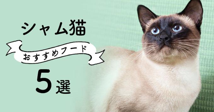 シャム猫におすすめのキャットフード5選