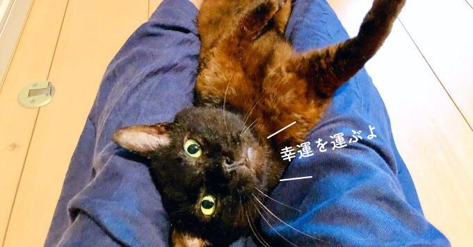 【幸運猫】縁起◎のツートーン猫さんは…大ファミリーの新入り君!