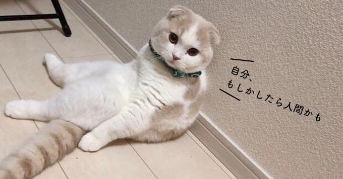 【ほわほわ猫さん】人間味あふれる佇まいが天使並みの可愛さです