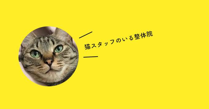 【癒しの整体猫】話題沸騰~猫スタッフのいる整体院「マッサージも任せてニャ」