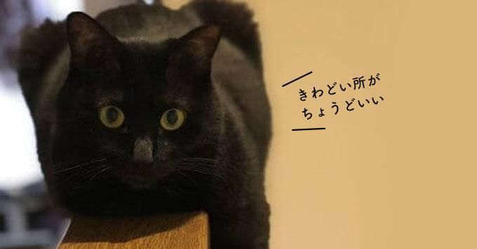 猫って際どい場所でくつろぎがち~落ちそうで落ちない黒猫さん発見