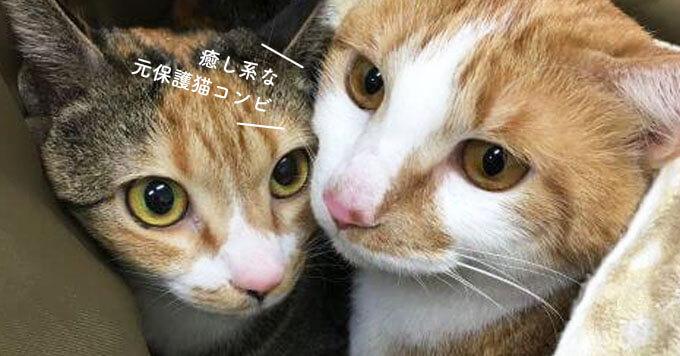 元保護猫コンビの「ねむねむ姿」&「ゴロゴロ音」が癒したっぷり^^