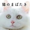 猫のまばたきは愛情表現?まばたきで分かる猫の気持ち
