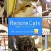 猫界の新しい働き方「Remote Cats #猫もリモートワーク中」始まりました!