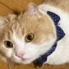 【もふ猫おねむ中】目を開けて寝る派のスコさんが可愛い動画~