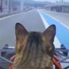 猫がF1レーサーになっちゃった!?「フェラーリ乗ってる気分ニャ~」