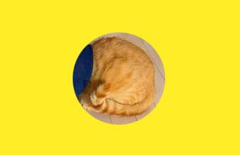 【不思議猫】奇妙な生命体…正体は表情豊かな茶トラ猫さんでした~