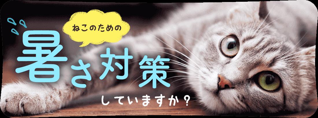 猫の暑さ対策