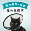 【獣医師が教える】猫の皮膚病の原因と症状、治療法、予防策