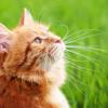 8月8日は「世界猫の日」~幸せにゃんこ大集合!【40ニャン掲載】