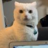やんごとなき神々しい猫さま【人を諌めるような表情】が渋いと話題