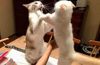 猫さんとの暮らしショット~ほんわか&現実がつまった傑作4連発が話題~