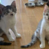 猫がいるお寺「那須の長楽寺」子猫2匹可愛く増員~