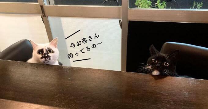 【看板猫】熱海をざわつかせているクセ強めなスゴ猫が大人気