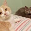 """<span class=""""title"""">【不思議な謎猫さん】もふもふ猫さんの可愛い「謎儀式」ごらんあれ</span>"""