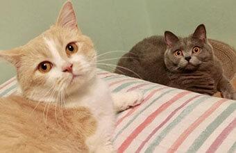 【不思議な謎猫さん】もふもふ猫さんの可愛い「謎儀式」ごらんあれ