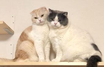 日めくり猫さん的な「1日ひとこと&猫」のツイッターがほっこり人気
