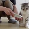【甘えんぼ猫】どうしても手で食べさせて欲しい可愛い猫さんが大人気~