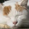 """<span class=""""title"""">【毎日5分ねこになる】動物の心の声を聞くプロが紹介する「ねこ瞑想」</span>"""