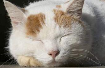 【毎日5分ねこになる】動物の心の声を聞くプロが紹介する「ねこ瞑想」