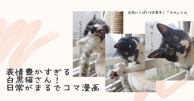 表情豊かすぎる白黒猫さん!日常がまるでコマ漫画~