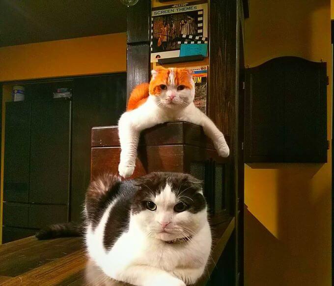 愛猫めもりーさん
