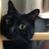 "<span class=""title"">【猫の失敗写真館】残像で笑わせてくるオフロスキーな黒猫さん</span>"