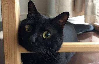 【猫の失敗写真館】残像で笑わせてくるオフロスキーな黒猫さん