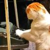 "<span class=""title"">おしゃれなおウチの猫さん!ムーディーなレトロ空間が似合いすぎ…</span>"