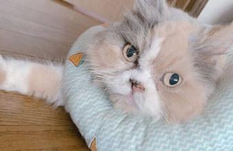 【仕事猫】もふもふなキャリアウーニャンが可愛いすぎ~「邪魔ちがうにゃ」