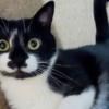"""<span class=""""title"""">表情豊かすぎる白黒猫さん!日常がまるでコマ漫画~</span>"""