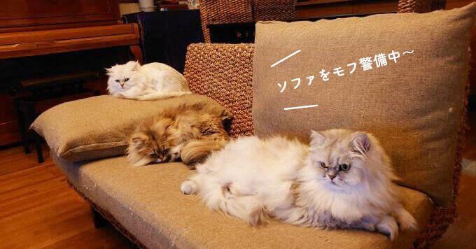 3猫さんによるモフモフすぎる【モフモフ警備隊】に癒される人続出~