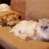 "<span class=""title"">3猫さんによるモフモフすぎる【モフモフ警備隊】に癒される人続出~</span>"