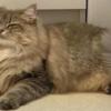 """<span class=""""title"""">【ふわもふ猫】ひたむきに飼い主の風呂をじっと待つ美少女猫さん</span>"""