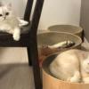 """<span class=""""title"""">【猫の横顔マニア必見】むにむに兄さんとキラキラ美少女な兄妹猫さん!</span>"""