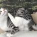 【猫vsクリスマスツリー】仁義なき戦いに終止符~おしゃれで安全なツリーのご提案
