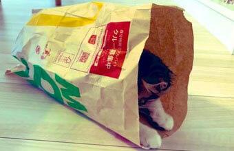【紙袋収まり猫】小柄猫さん、ジャストフィットな紙袋を見つける~
