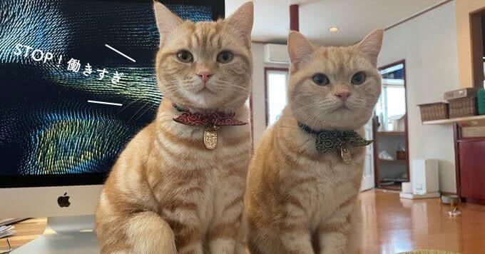 姉妹猫さんによる働き方指導「STOP働きすぎ!」が可愛いやら厳しいやら~