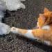 【猫さん動画】可愛すぎてバズり中~雪にビビり散らす猫さん!
