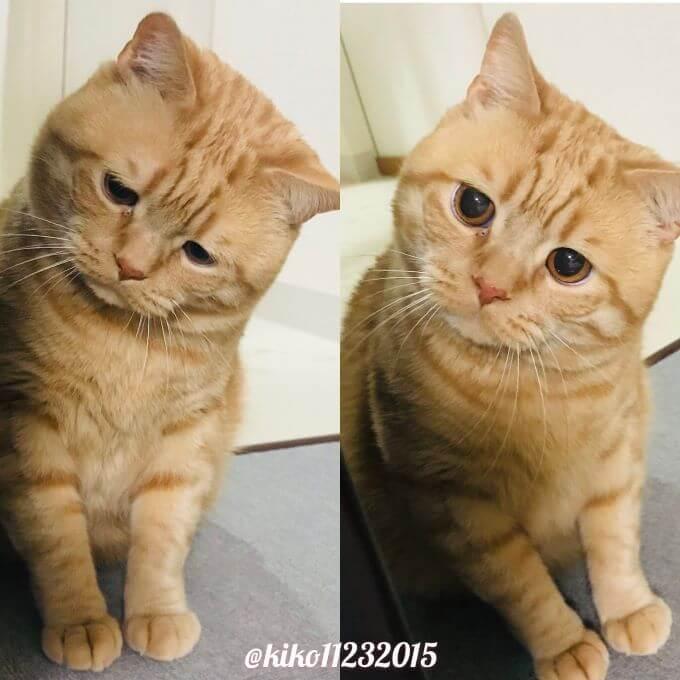 猫のアランくん