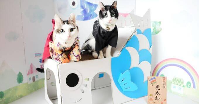 鯉のぼり型【猫ハウス】誕生!猫助けしながら「端午の節句」のお祝いを…