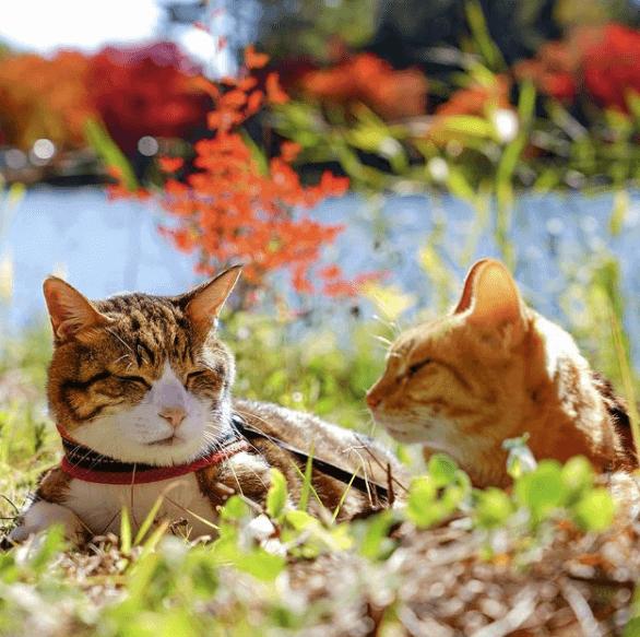 猫の日イベント