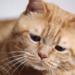 【困り顔の猫】世界中のファンを絶賛癒し中~インスタフォロワー7万人!